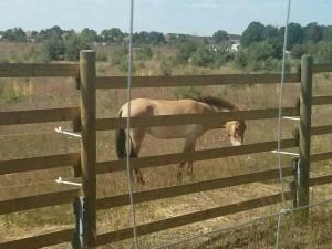 einzelnes Pferd